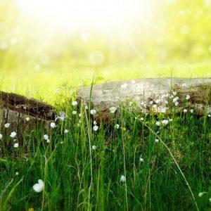 Eco_Toxin Free Living