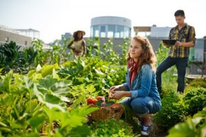 join a community garden and grow your own organic veg