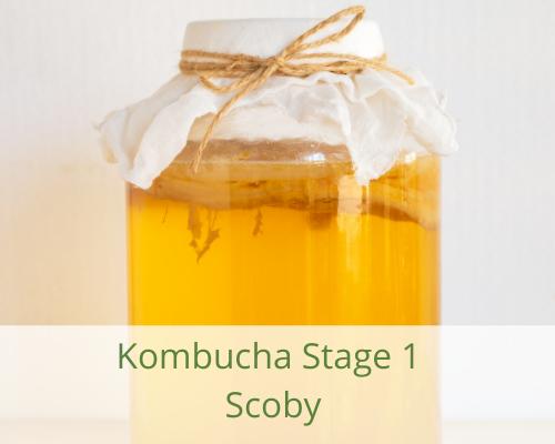 kombucha-scoby